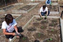community-planting-5-7-11-003