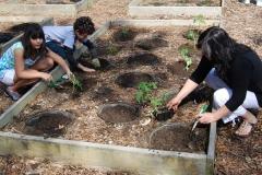 community-planting-5-7-11-011