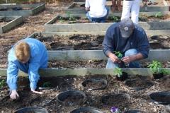 community-planting-5-7-11-015