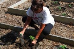 community-planting-5-7-11-019
