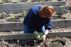 community-planting-5-7-11-020