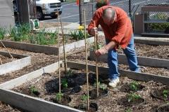 community-planting-5-7-11-031