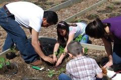 community-planting-5-7-11-034