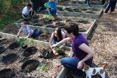 community-planting-5-7-11-051