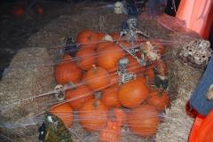 Pumpkin-Fest-13-019